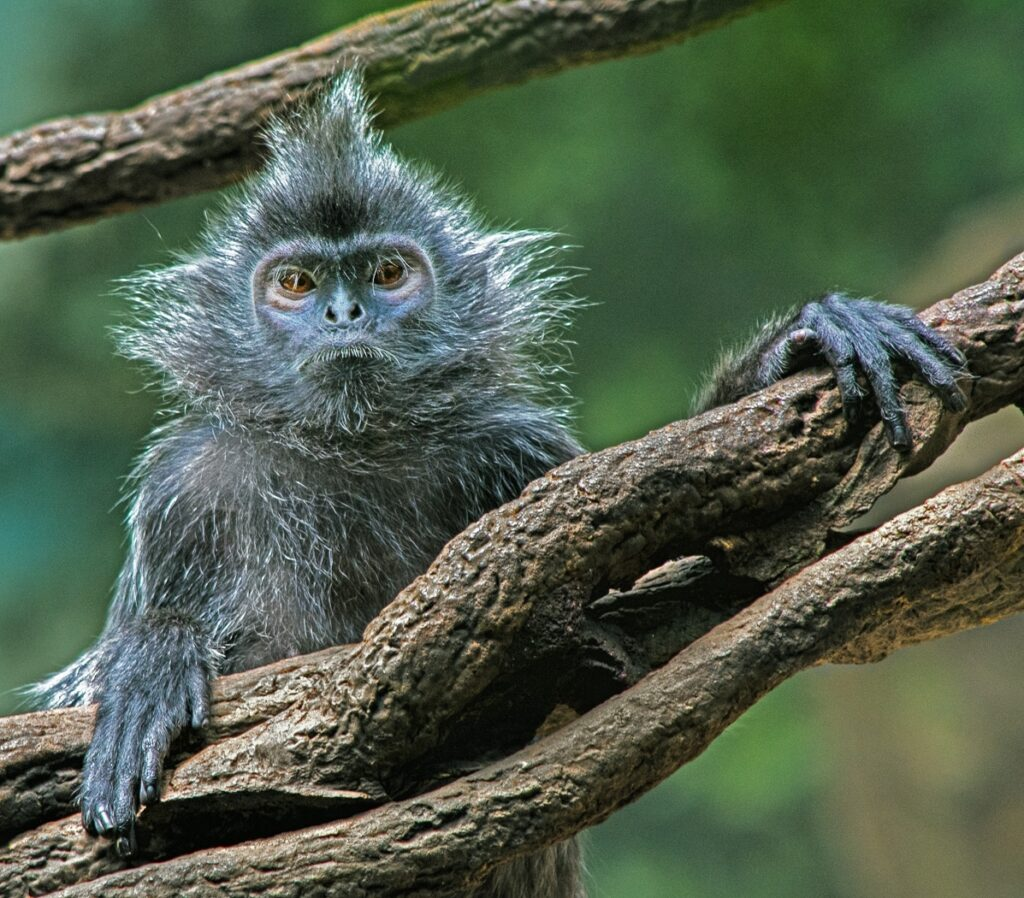 """Monkey See"" by Nancy Morrison of NBCC"